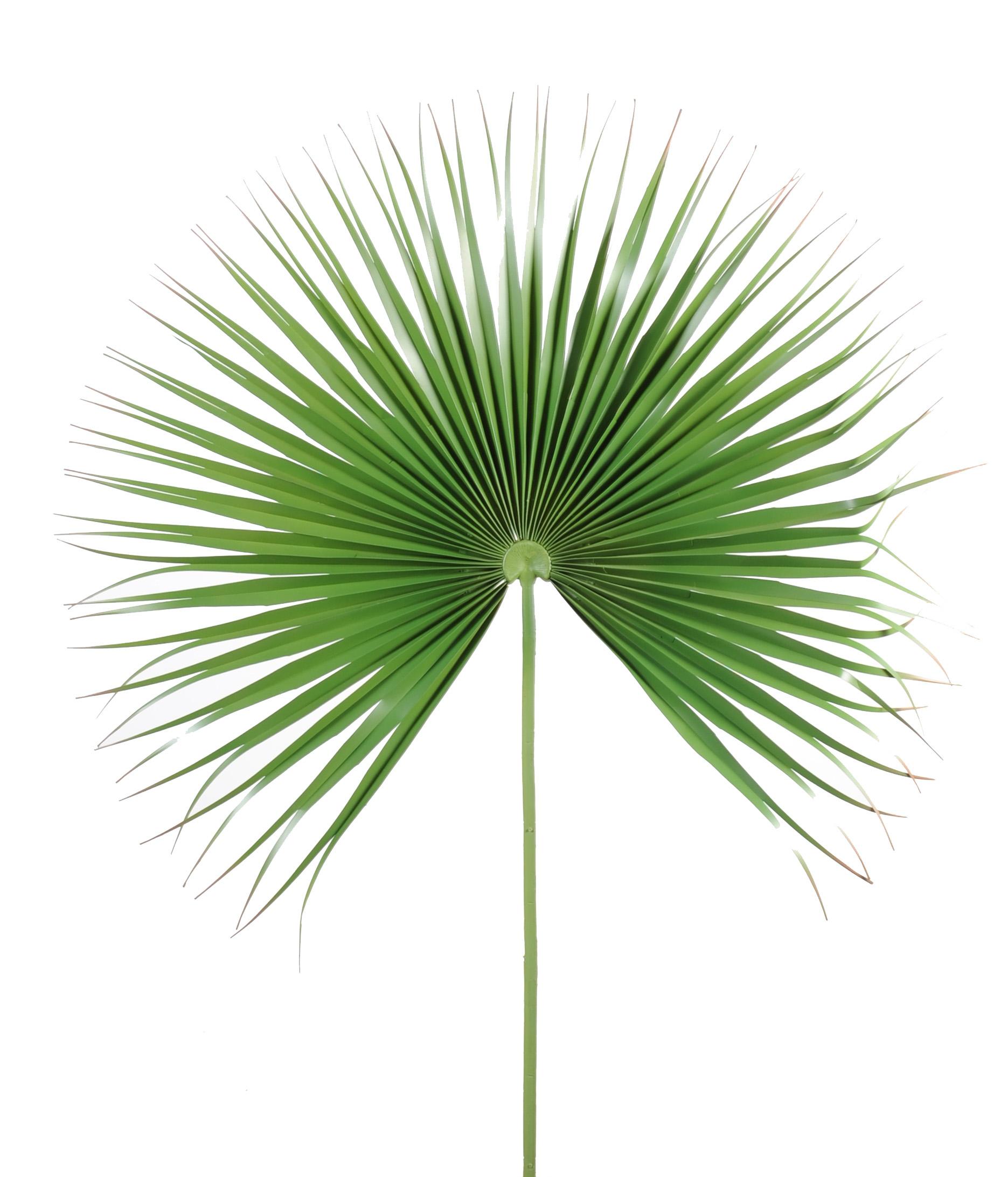 Feuille de palmier artificielle d coration et - Set de table feuille de palmier ...